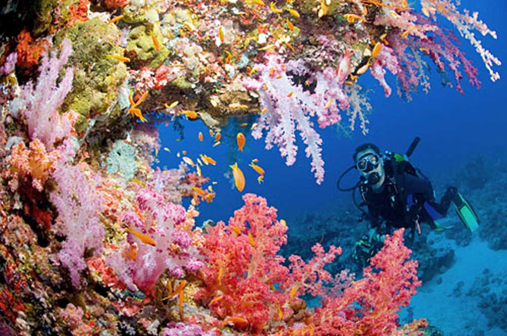 The Red Sea Coast